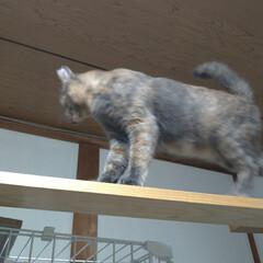 猫/可愛い/猫との暮らし/ニャンコ同好会/猫ケージ 掃除機したら テンが居ない と見渡したら…(4枚目)