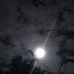 癌/もつ鍋/友達/お見舞い/病院/パートナー/... この月 本当は 月の周りに薄い輪っかが出…