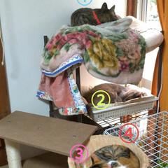 リメイク/メルカリ/手縫い/可愛い/お昼寝/4ニャンズ/... 午後は 猫衆みんなお昼寝でした🐱💤  安…(1枚目)