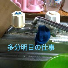 保護猫/ジモティー/残念/野良猫/肩乗り猫/アルストロメルア/... 今日のマダニちゃんは、 自分から 縦抱っ…(3枚目)