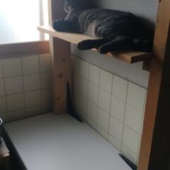 ジモティー/猫トイレ/猫のいる暮らし/にゃんこ同好会/夏バテ/キャットタワーDIY/... 暑かった~(*_*) クーラーつけており…(2枚目)
