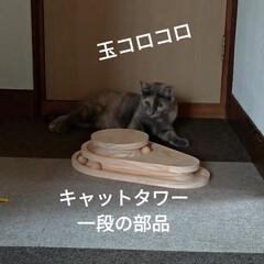 猫オモチャ/猫との暮らし/キャットタワー合体/キャットタワー部品/爪とぎ/キャットタワー/... オモチャで密かに遊んでたサクラに カメラ…(4枚目)