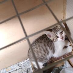 ありがとう/小さな命/ご縁/先住猫さん/懐かしい/保護猫/... 今日の保護猫ちゃん😸 ①② 暴れるのは …