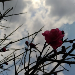 草取り/花/ペット/猫/掃除 前猫ムーちゃんが 埋葬した時に植えた梅😸…