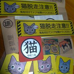 ステッカー/可愛い/脱走防止対策/猫安全対策/猫グッズ/猫のいる暮らし/... 前から 可愛くて気になってた  猫脱走注…