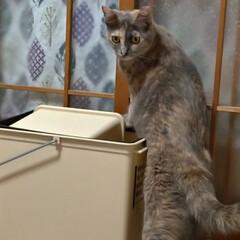 サビ猫/猫根性/粘り強い/蚊/ゴミ箱/猫との暮らし/... 夕方 宅配を取りに出て 蚊が多いので 入…(2枚目)