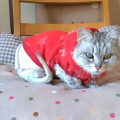 可愛い/猫との暮らし/ニャンコ同好会/保護猫/野良猫/疲れた/... 今日は、オカンちゃんが休みで マッサージ…(2枚目)