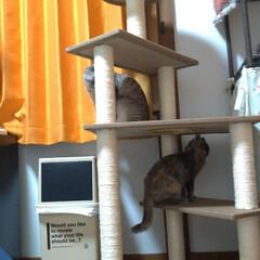 サビ猫/サバトラ/キジトラ/脱走/ニャンコ同好会/猫との暮らし/... メルカリで先日買ったキャットタワー テン…(5枚目)