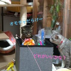 お願い/悲しい/地元サイト/子猫/野良猫/いたずら/... 昨日、放置サボちゃんの花が咲いてました✨…(4枚目)