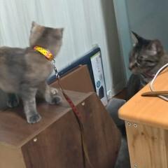 治療/耳ダニ/寄生虫/保護猫/子猫/ニャンコ同好会/... おはようございまーす  先日メル○リで購…(3枚目)