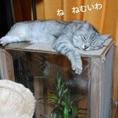 ニャンコ同好会/雨の日/猫との暮らし 雨の日☔️の 猫🐱(2枚目)