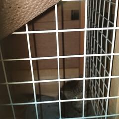 キジトラ/保護猫/にゃんこ同好会/DIY/100均/ダイソー 今日 昼、影なのに 大量の汗 立ちくらみ…