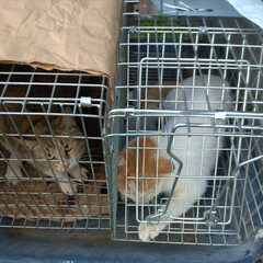 知る事のない悲しみ/ニャンコ同好会/猫との暮らし/避妊手術/去勢済み/保護捕獲/... 今日は 近所のゴミステーションの周りでの…