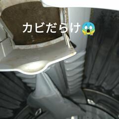 晩ご飯/バジル/ビックリ/穴無し洗濯槽/キャットタワー/猫との暮らし/... 昼から 気圧などで中々のアチコチのだるさ…(5枚目)
