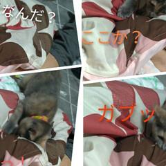 保護猫/遊び/壊れそう/ニャンコ同好会/猫との暮らし ①テン! あんた、いい加減にしなさい😤 …(3枚目)