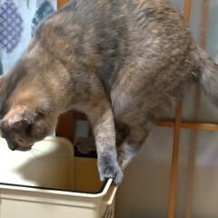 サビ猫/猫根性/粘り強い/蚊/ゴミ箱/猫との暮らし/... 夕方 宅配を取りに出て 蚊が多いので 入…(5枚目)