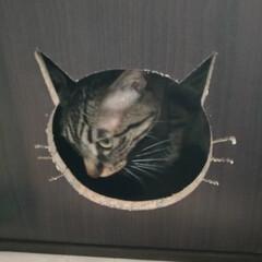 カラボリメイク/ビビり猫/ニャンコ同好会/隠れる/猫ハウス/動物モチーフグッズ/... 逆再生画像になりますが‥  少し前から …