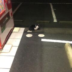 寒い/TNR/野良猫相談/野良猫 昨日夜中23時30分 最近猫の事で知り合…