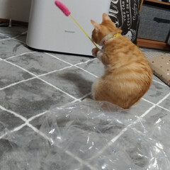 花粉症/家電/買い物/プラズマクラスター/空気清浄機/猫じゃらし/... 猫運動会と、稲なのか寝起きに酷い花粉症😱…