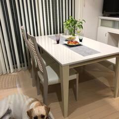 我が家のテーブル/犬/ラブラドール/ダイニングテーブル/ご飯 我が家のダイニングテーブルです #我が家…(1枚目)