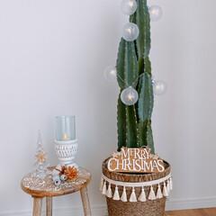 bohostyle/BOHOインテリア/タッセル/フリンジ/クリスマス雑貨/サボテン/... サボテン🌵クリスマスツリー🌲の鉢カバーに…