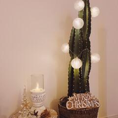 クリスマスデコ/サボテン/イルミネーションライト/BOHOインテリア/リビングインテリア/bohoスタイル/... 柱サボテンにイルミネーションを付けてクリ…