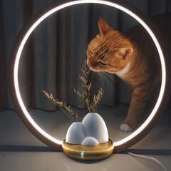 花/リビング 安らぎの時間を作り出す照明「O Lamp…
