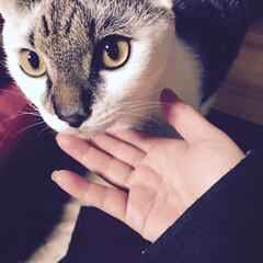猫の日/ペット 2月22日 にゃ〜♪にゃ〜♪にゃ〜♪ 猫…
