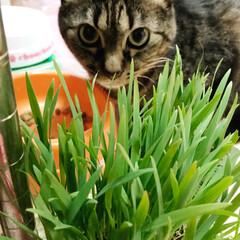 猫ちゃん/ペット 怖がりな ミミちゃんを かくし撮り  *…