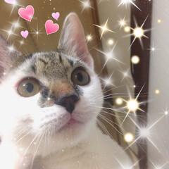 ネコちゃん/ペット 何  見てるの?(´⊙ω⊙`)