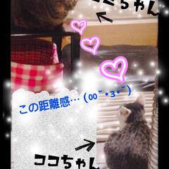 猫ちゃん/ペット 奇跡のツーショット✨✨ ∑(゚Д゚)  …