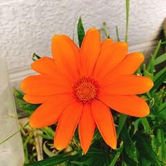 癒し/お花達 今帰宅💦💦😅 やっと明日から連休です🙌 …