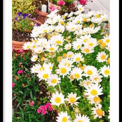 癒し/お花達 おはようございます😃 お花達が元気に咲き…