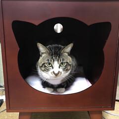 ペットのある暮らし/猫 ななに ななハウスを可愛くていつか買って…(1枚目)
