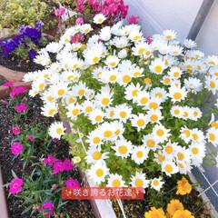 パワー/癒し/お花 🍀🍀🍀我が家のお花達🍀🍀🍀 元気に咲き誇…
