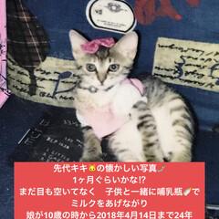 大切/家族/猫 キキ🐱の懐かしい写真が ポラロイドカメラ…