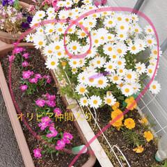 癒し/花 お花が増えました💐 🍅アイコ🍅 いっぱい…