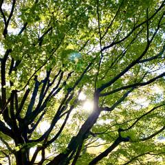 花/公園/散歩 昨日、昼休みにブラブラ散歩した時に 撮っ…(2枚目)