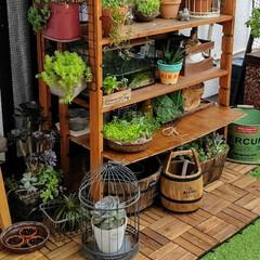 DIY/多肉植物のある暮らし/バルコニーガーデン/セリア/夏対策/お庭あそび バルコニーで植物を育てています。  長雨…