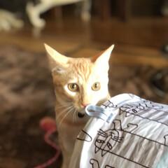 猫のいる暮らし/猫とインテリア/にゃんこ同好会/LIMIAペット同好会/ねこと暮らすお部屋 お久しぶりです。 チビ達がこんなに大きく…(3枚目)