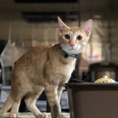 猫のいる暮らし/猫とインテリア/にゃんこ同好会/LIMIAペット同好会/ねこと暮らすお部屋 お久しぶりです。 チビ達がこんなに大きく…(8枚目)
