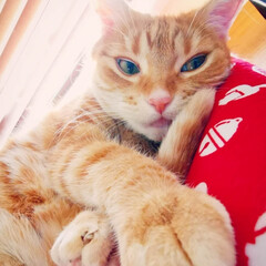 日向ぼっこ/猫好き/ねこ/猫と暮らす 尻尾を枕に🐈♪