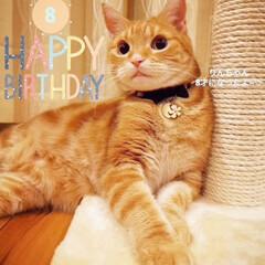 誕生日/猫と暮らす/ねこ りんちゃん8才になりました🎉 ♡Happ…