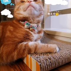 猫と暮らす/ねこ ✨😺✨(1枚目)