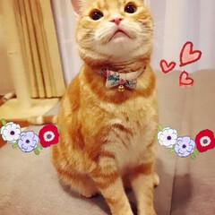 猫と暮らす/猫の首輪/ねこ 新しい首輪だよ♡😺🎀 春らしい小花柄🌺