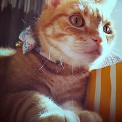 猫好き/猫部/猫のいる暮らし/猫と暮らす/猫派/ねこ 通路ど真ん中 床掃除してても 全然動いて…(2枚目)