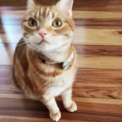 猫と暮らす/ねこ ん~~~?(ФωФ) 耳が可愛すぎ