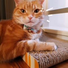 猫と暮らす/ねこ ✨😺✨(2枚目)