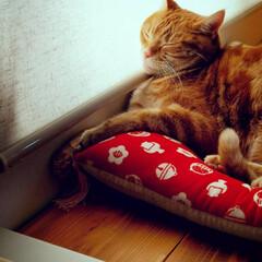 猫好き/猫派/猫と暮らす 寝る姿も癒し♡(4枚目)