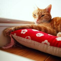 猫好き/猫派/猫と暮らす 寝る姿も癒し♡(3枚目)